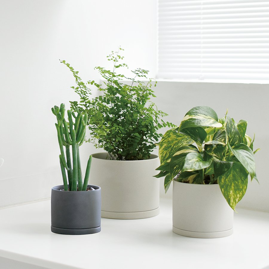 Three POT PLANT 191's potted with plants on a table