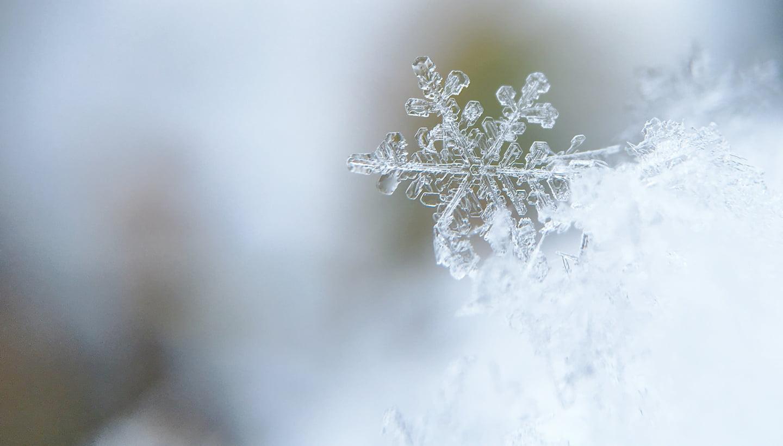 雪の結晶から生まれた素材