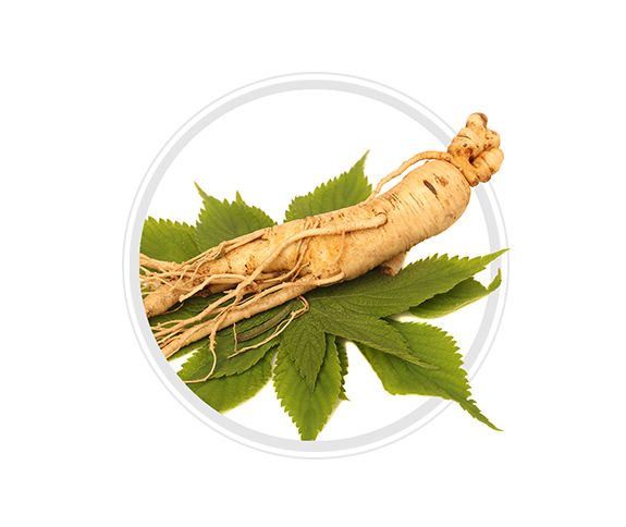 Ginseng Stem Cells