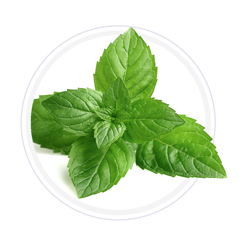Ginger & Balm Mint