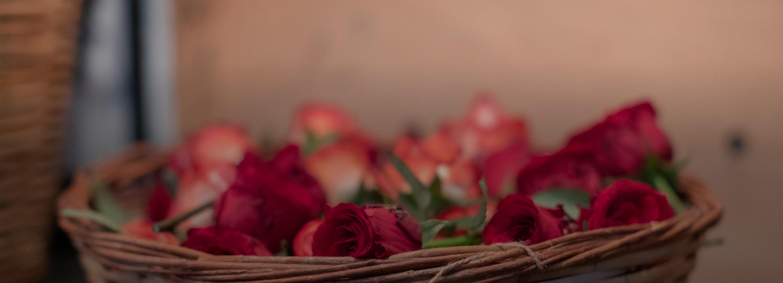 Apothecary Wild Rose