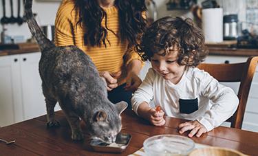 Kitten Food & Treats