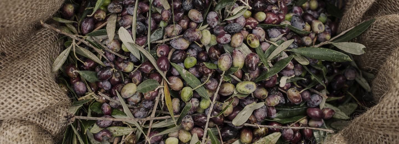 Pure Greek Olive