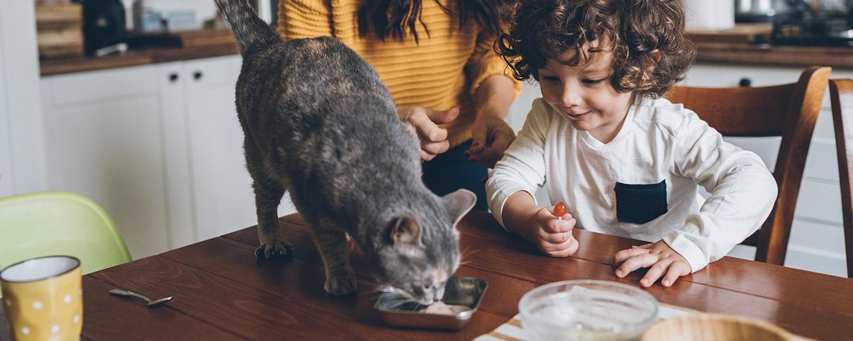 Dry Kitten Food