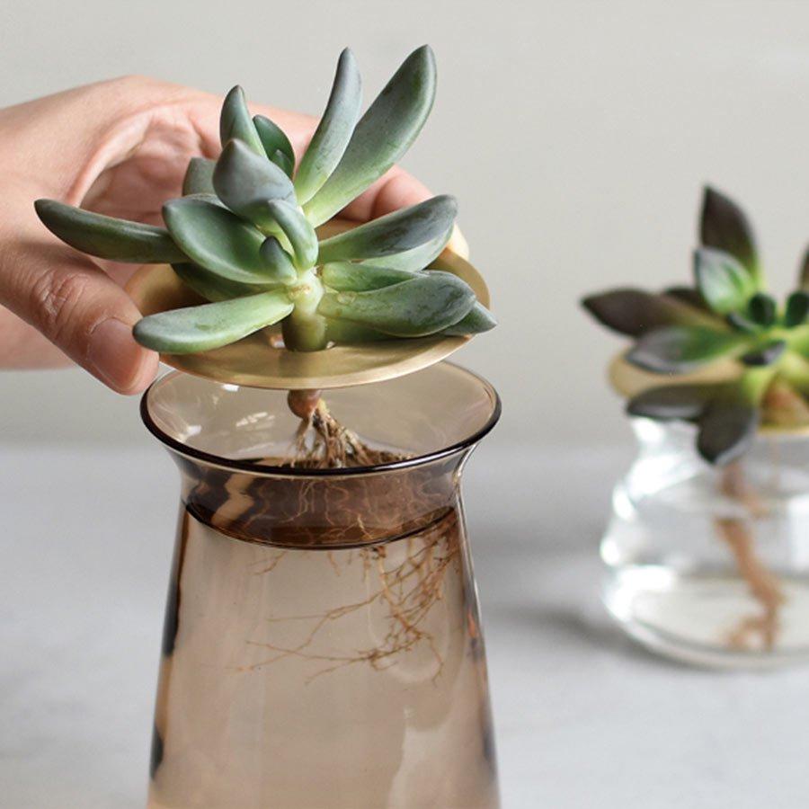 A succulent propagating in a LUNA vase in brown