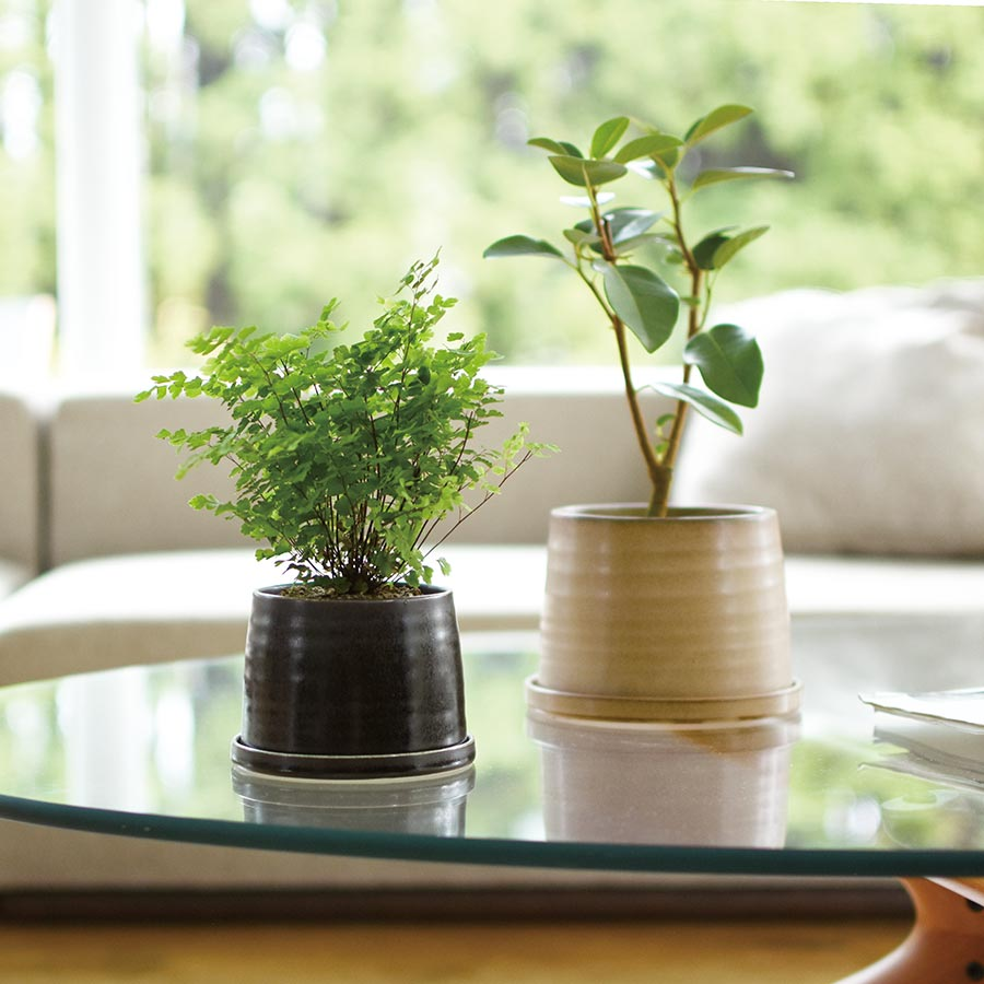 Two PLANT POT 192's on a glass table