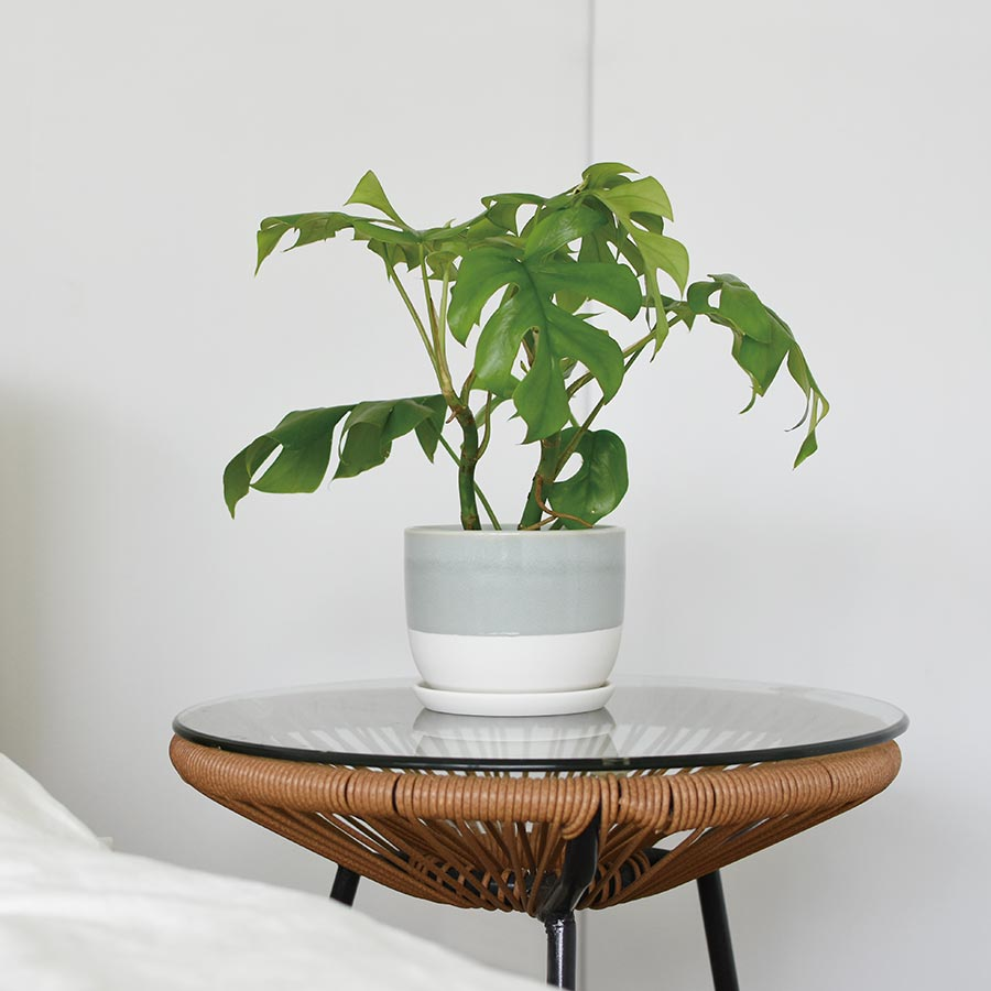 PLANT POT 193 placed on a bedside table
