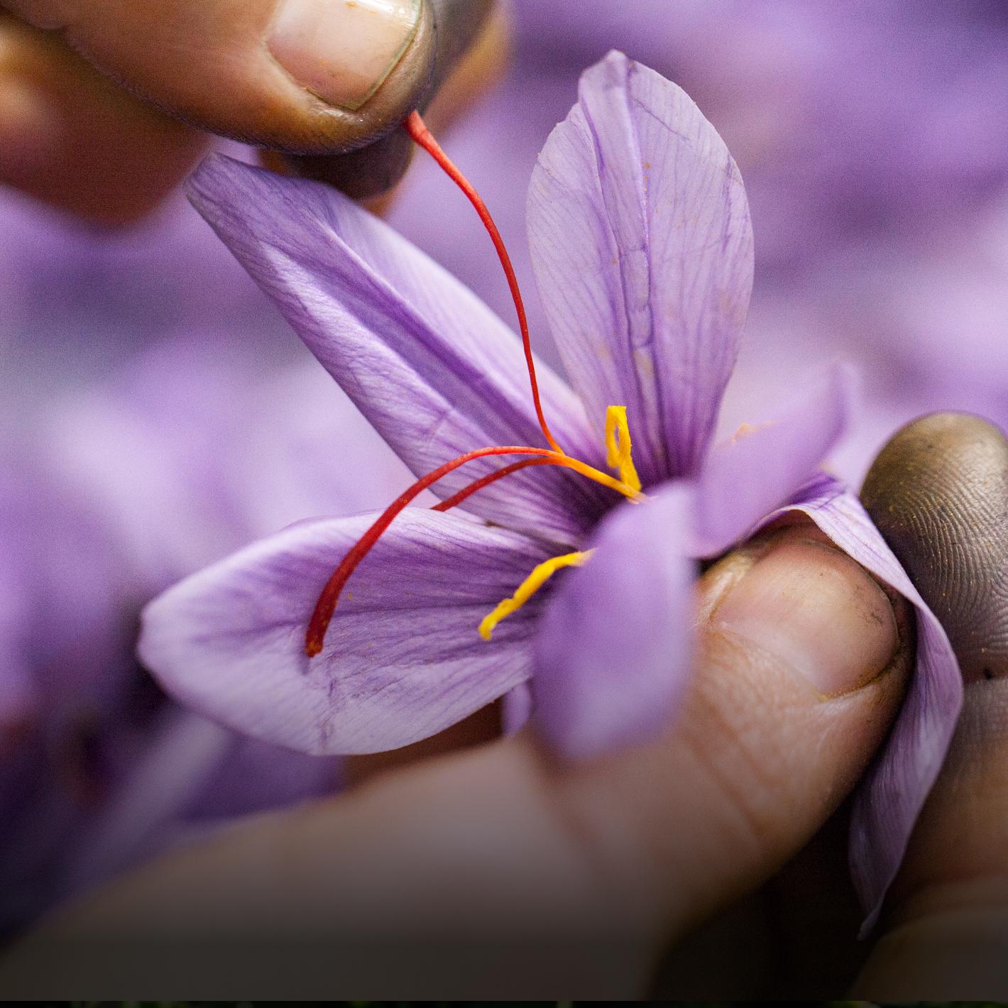 Korres Golden Krocus Ageless Saffron Elixir Serum Anti Aging