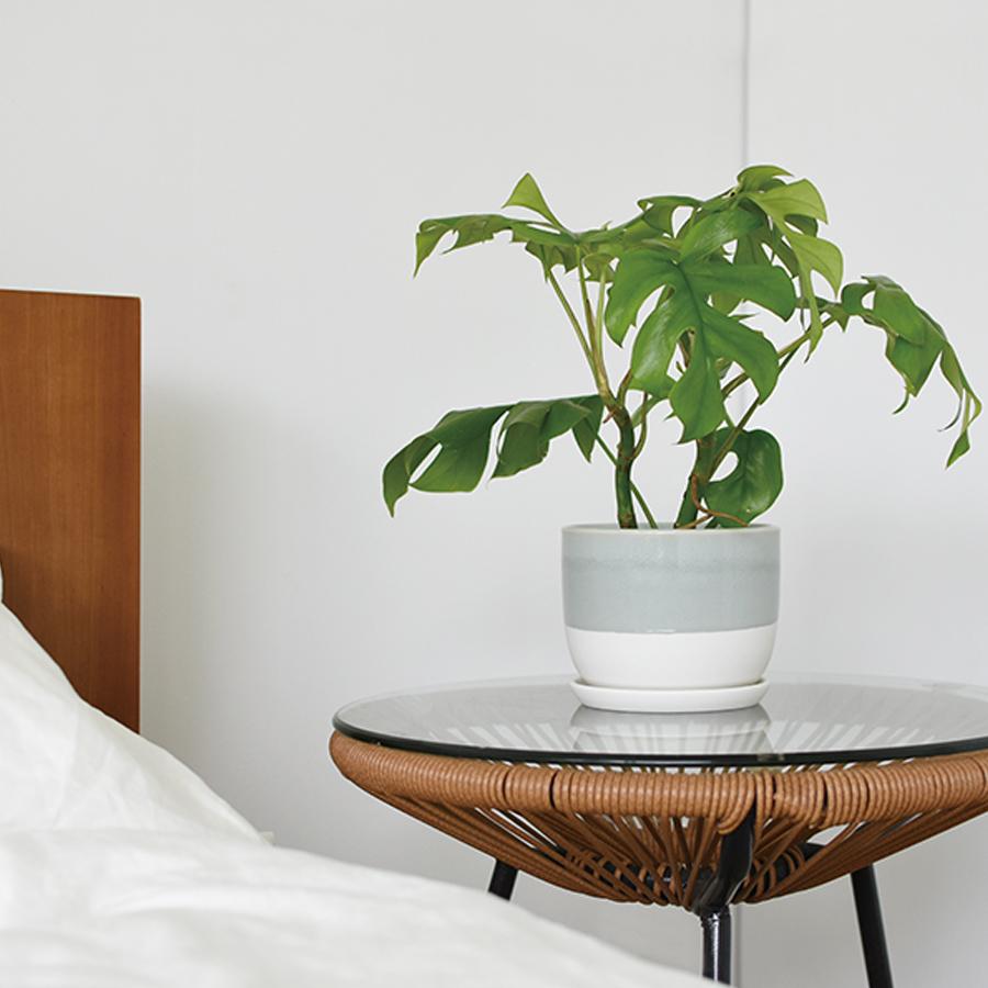 KINTO PLANT POT 193_ 140MM / 6IN BEIGE THUMBNAIL 3