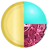Gold|Turquoise|Ruby Swatch