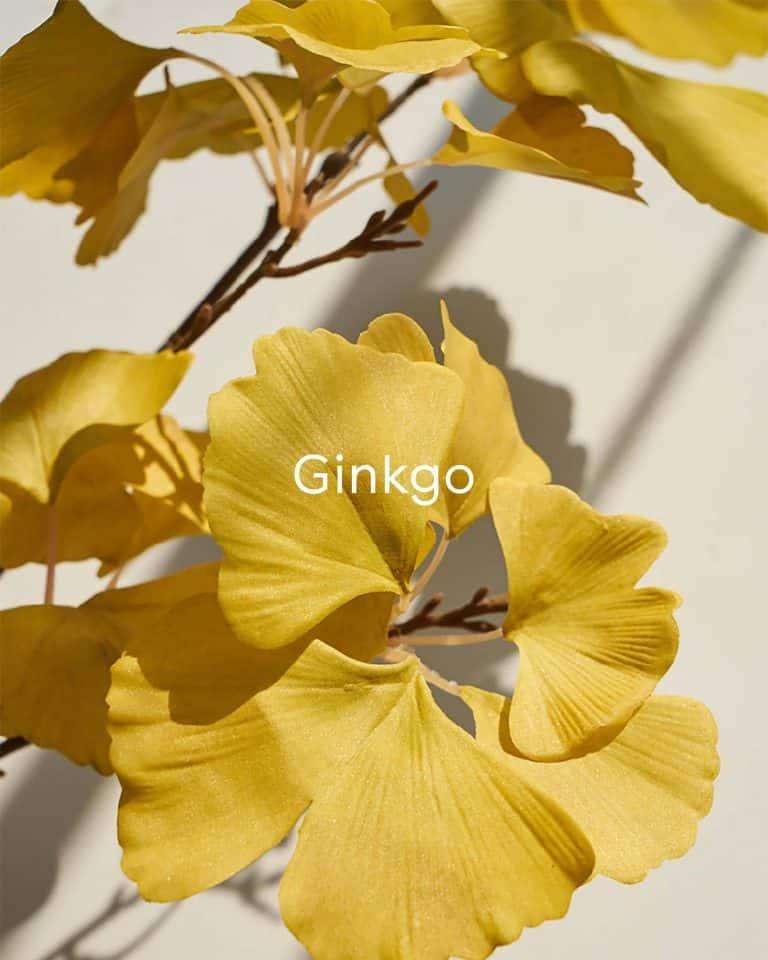 Defend Gentle Exfoliator with Ginkgo