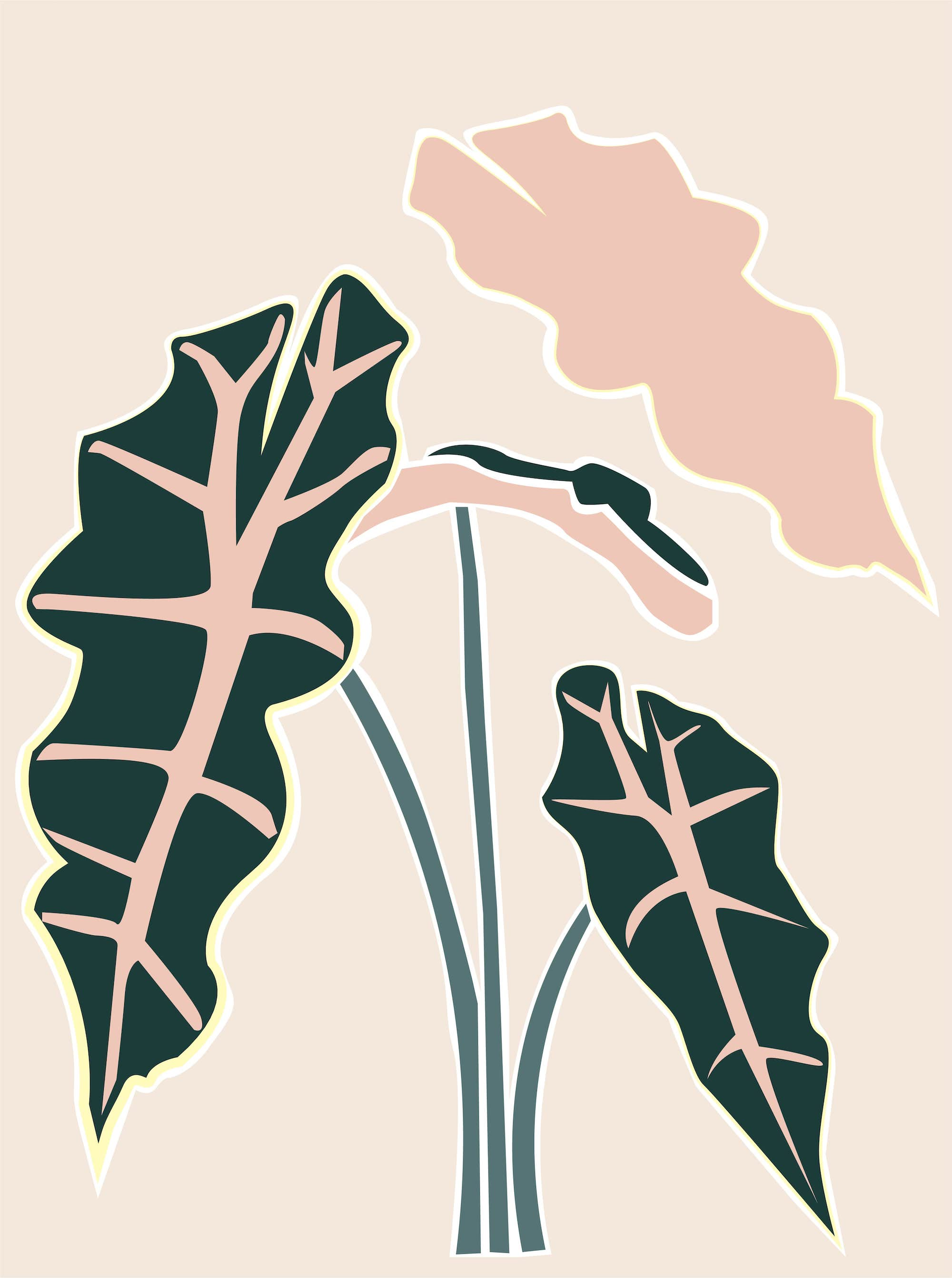 Plant care tips by Leaf Envy Alocasia Polly, watering, humidity, fertiliser requirements