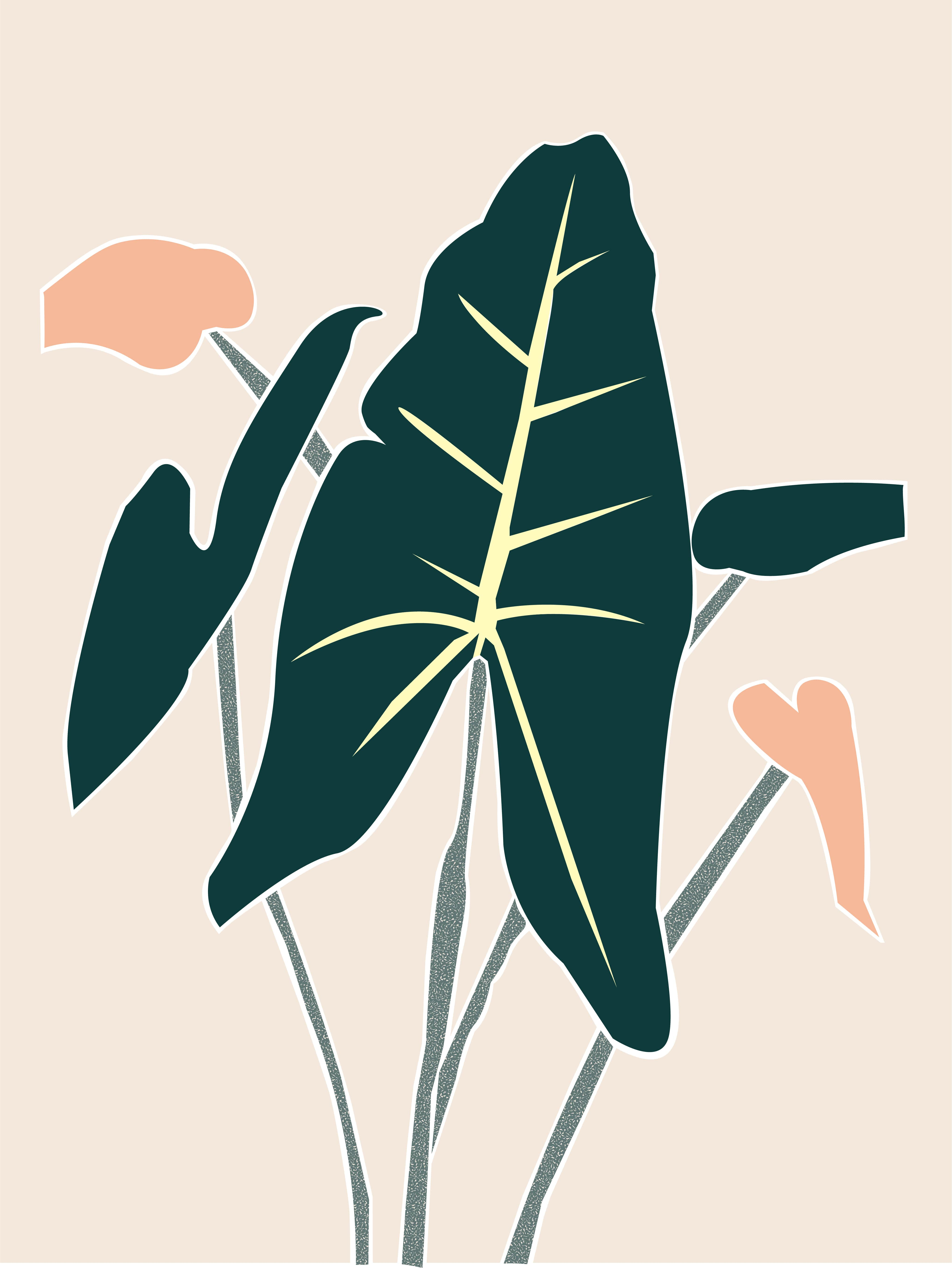 Plant care tips by Leaf Envy  Alocasia Zebrina  light, watering, humidity, fertiliser requirements