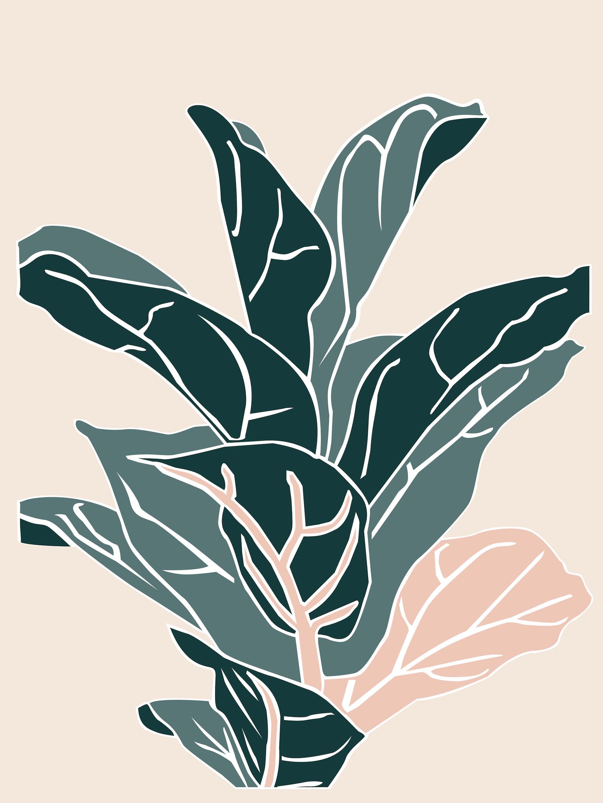 Plant care tips by Leaf Envy  Fiddle Leaf Fig  Light, watering, humidity, fertiliser requirements