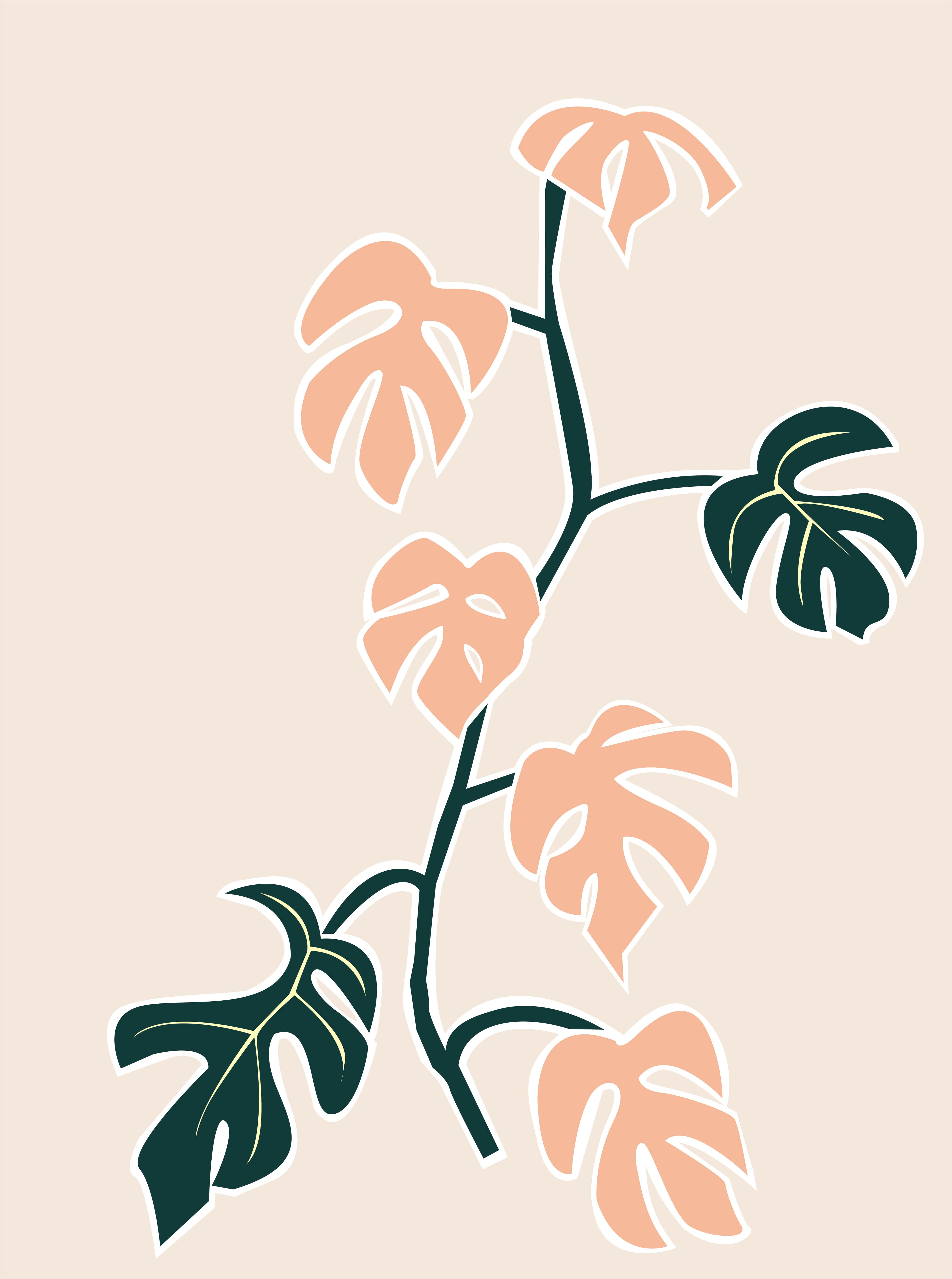 Plant care tips by Leaf Envy Mini Monstera light, watering, humidity, fertiliser requirements
