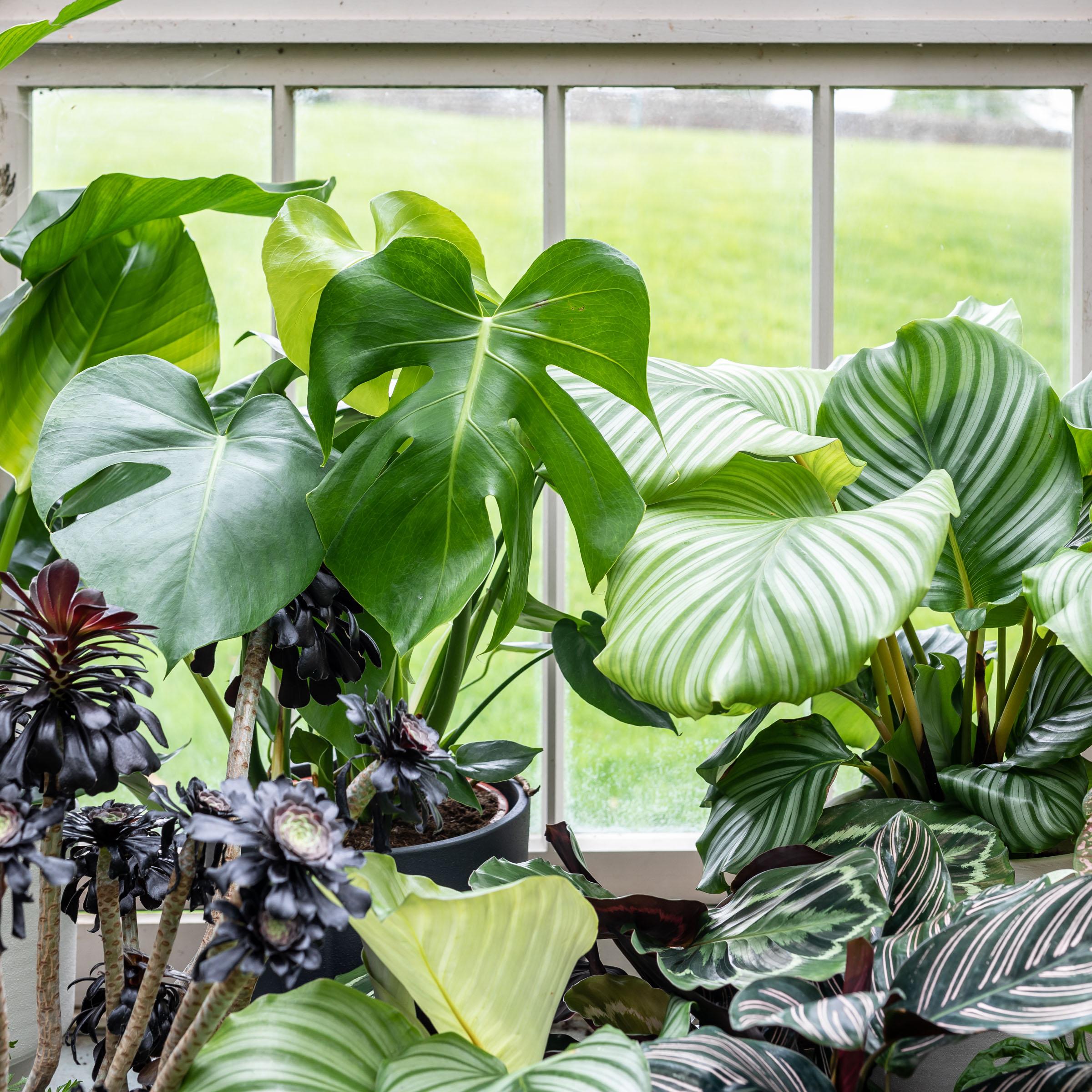 Plant care tips by Leaf Envy  Fertiliser indoor plants