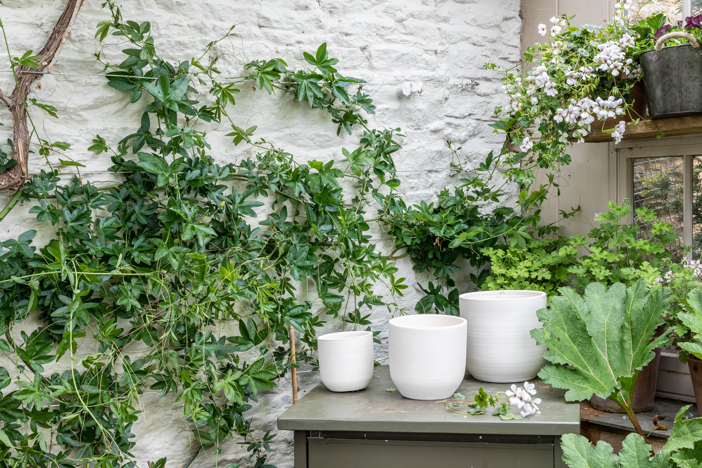 Plant care tips by Leaf Envy  How to repot your plant