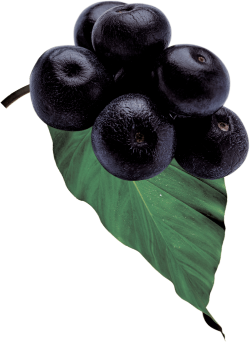 GO BIG ingredients acai berry