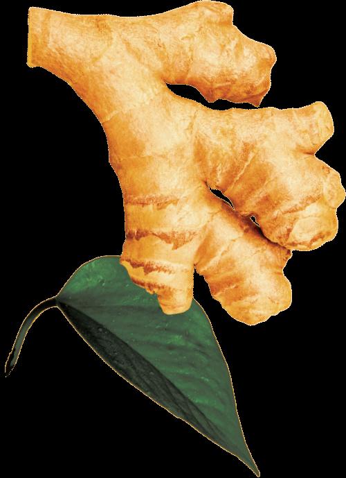 GO BIG ingredients ginger