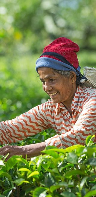 Global Organic Tea Farms & Co-ops