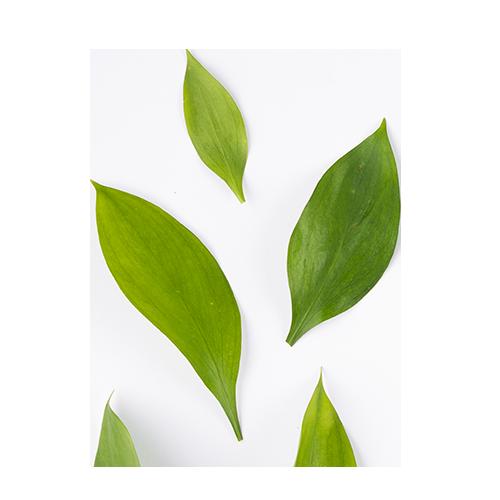 Green Tea Supple Vegan Hand & Body Créme 17oz