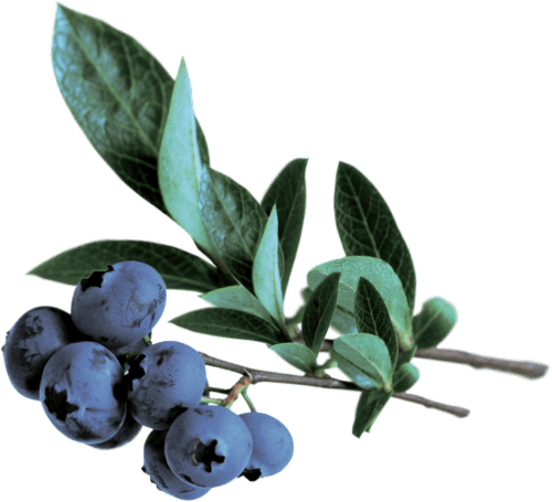 GO BIG ingredients blueberry