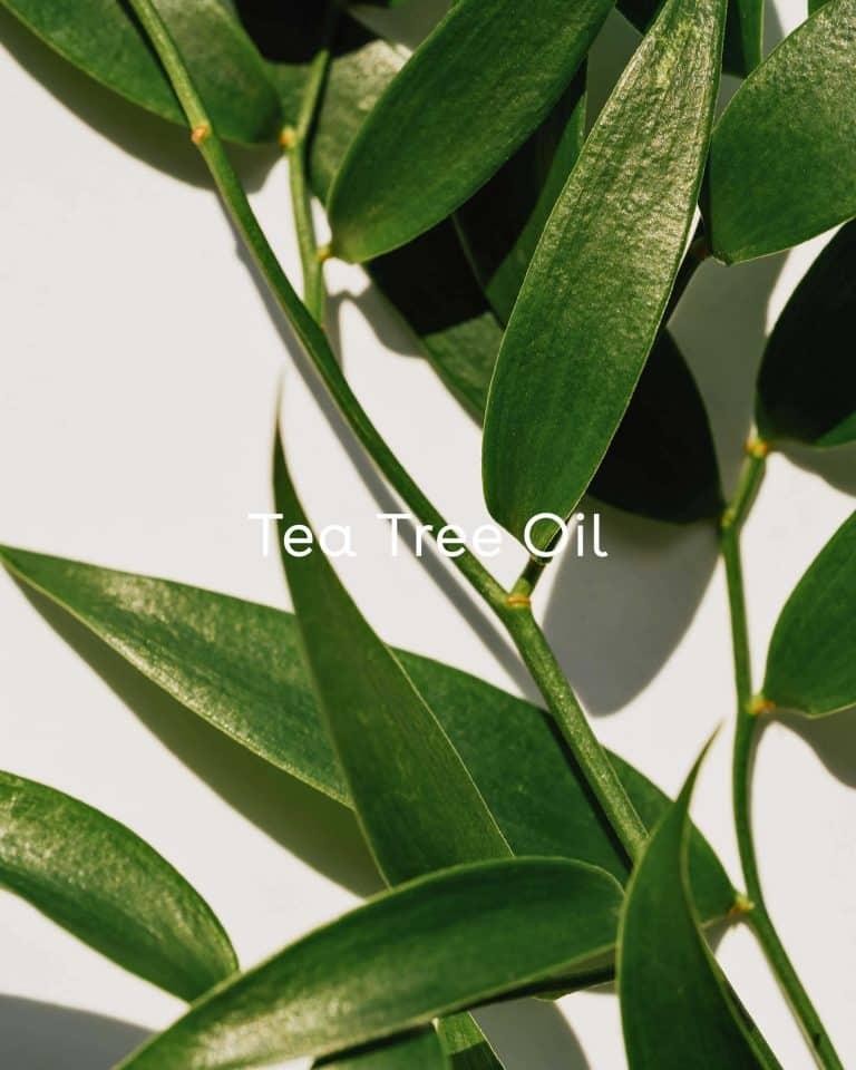 Rescue Pore-Minimizing Toner with Tee Tree Oil, Horsetail, Witch Hazel & Rosemary