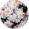 Flower Complex