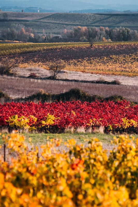 Maison Ventenac Vineyard