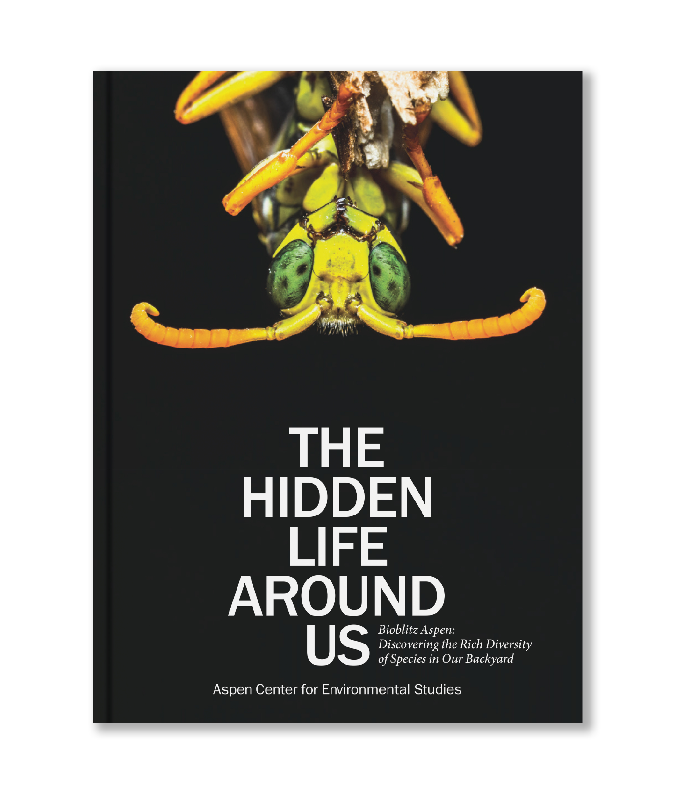 The Hidden Life Around Us: Bioblitz Aspen, Exploring the Rich Diversity of Species in Our Backyard