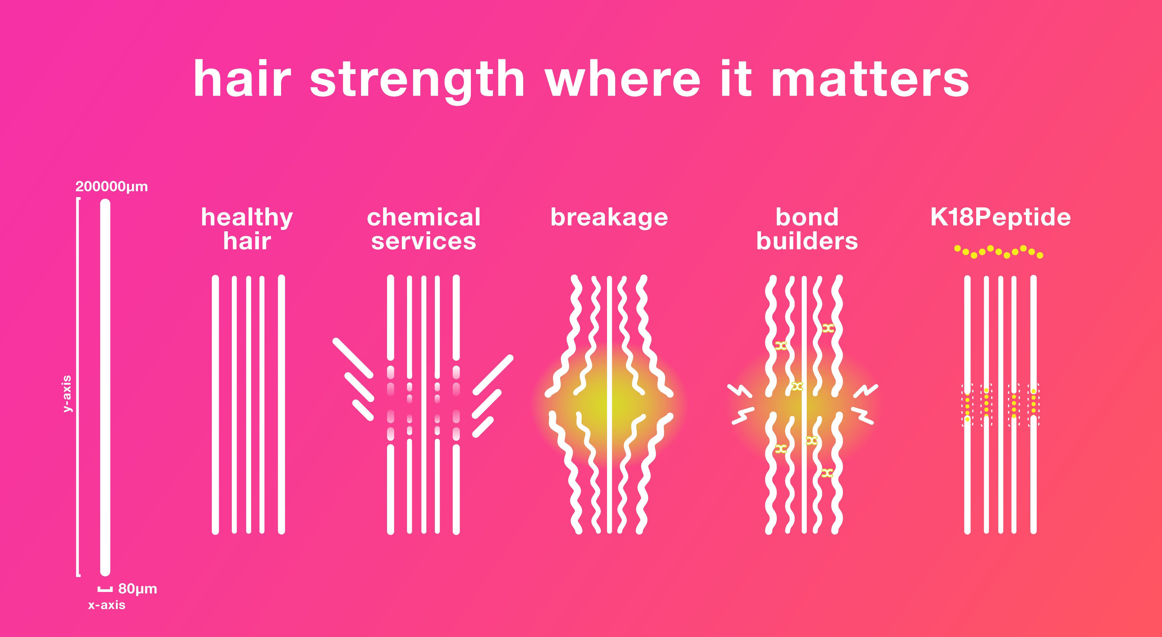 SCIENCE CLASS 01: where does hair strength come from?