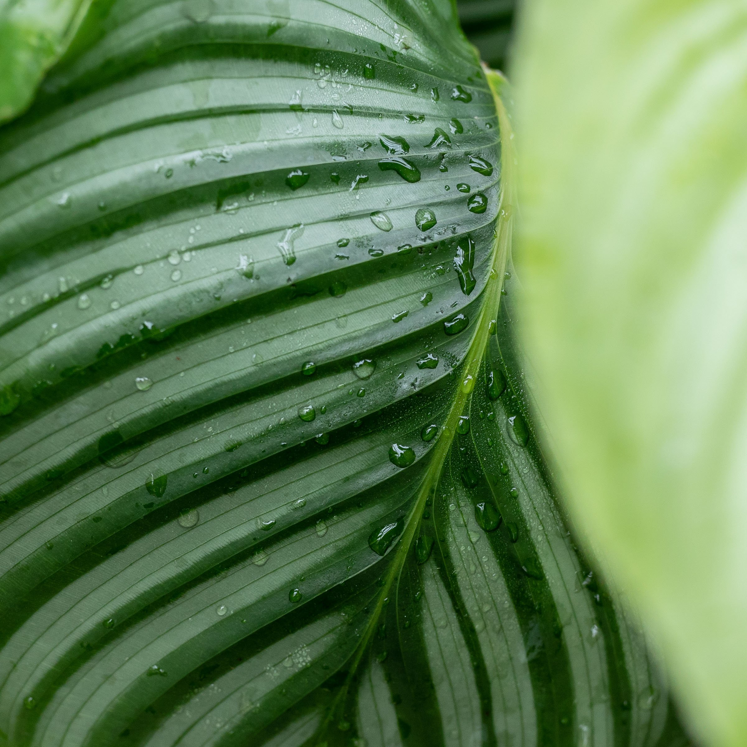 Plant care tips by Leaf Envy : Top 5 watering tips for indoor plants