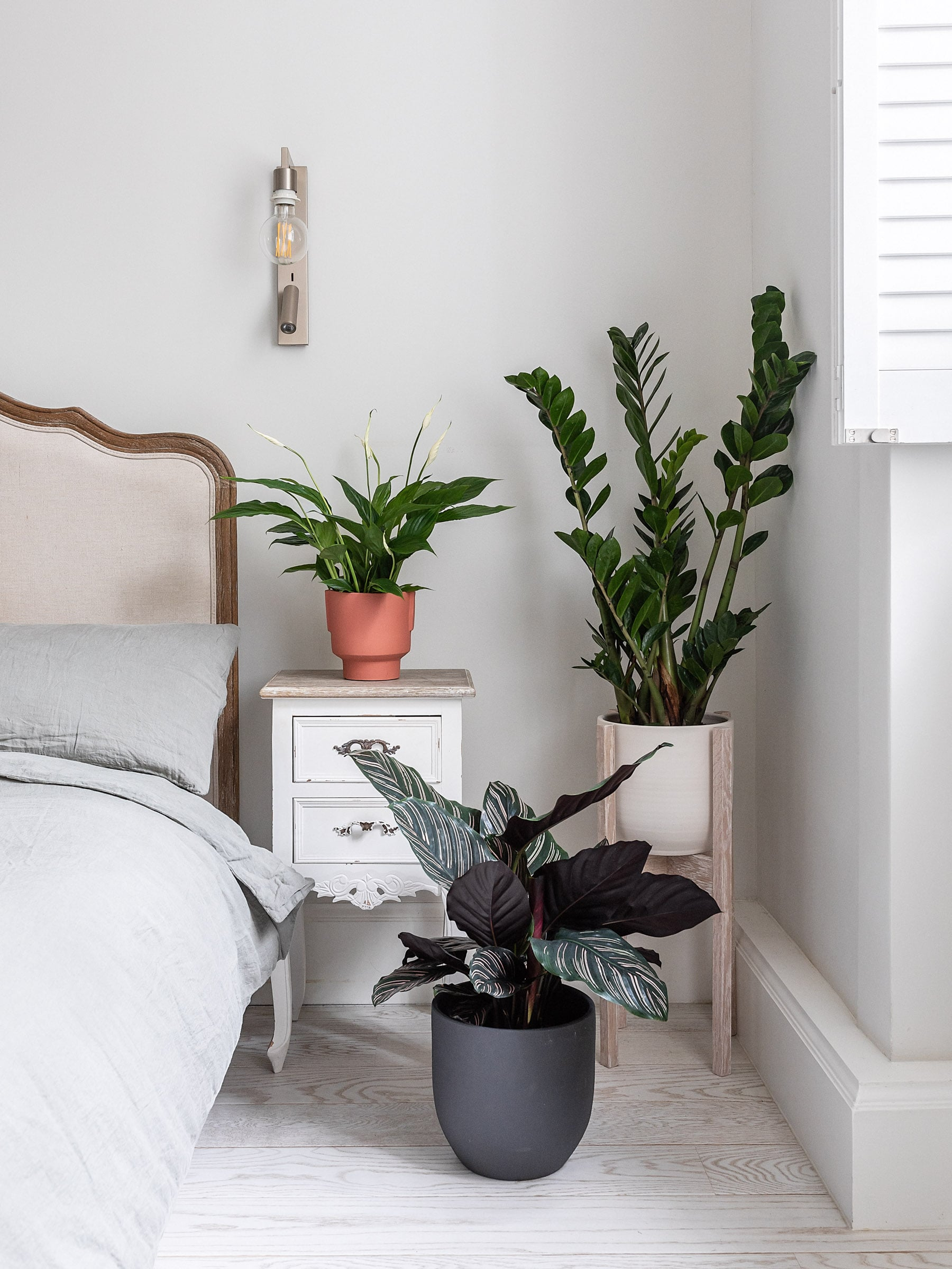 Keeping indoor house plants alive on holiday by Leaf Envy