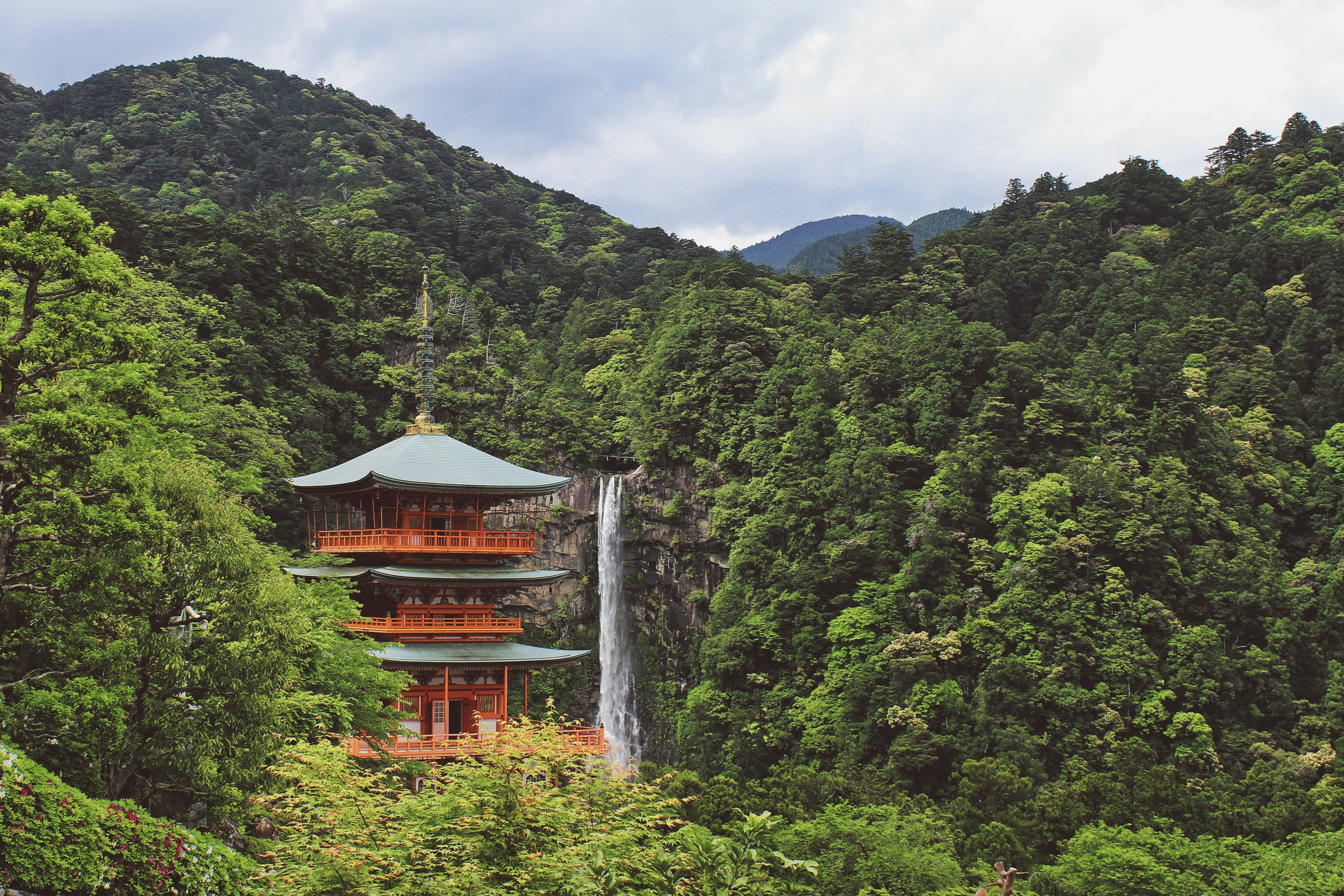 Japan nature trees