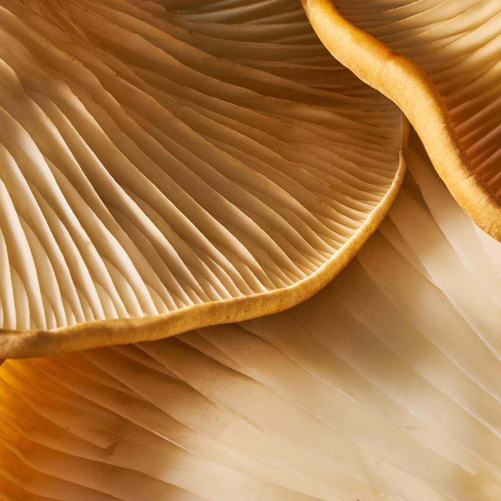 Shiitake & maitake mushrooms
