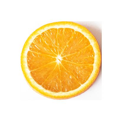 Rainforest Mist Vitamin C Shower Filter