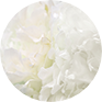 White Flower Extract