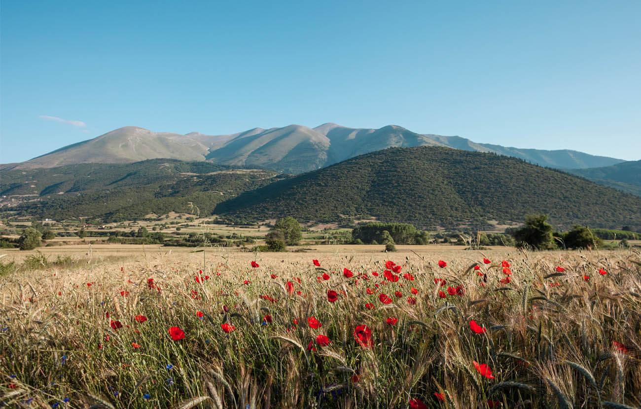 Why Greek Beauty