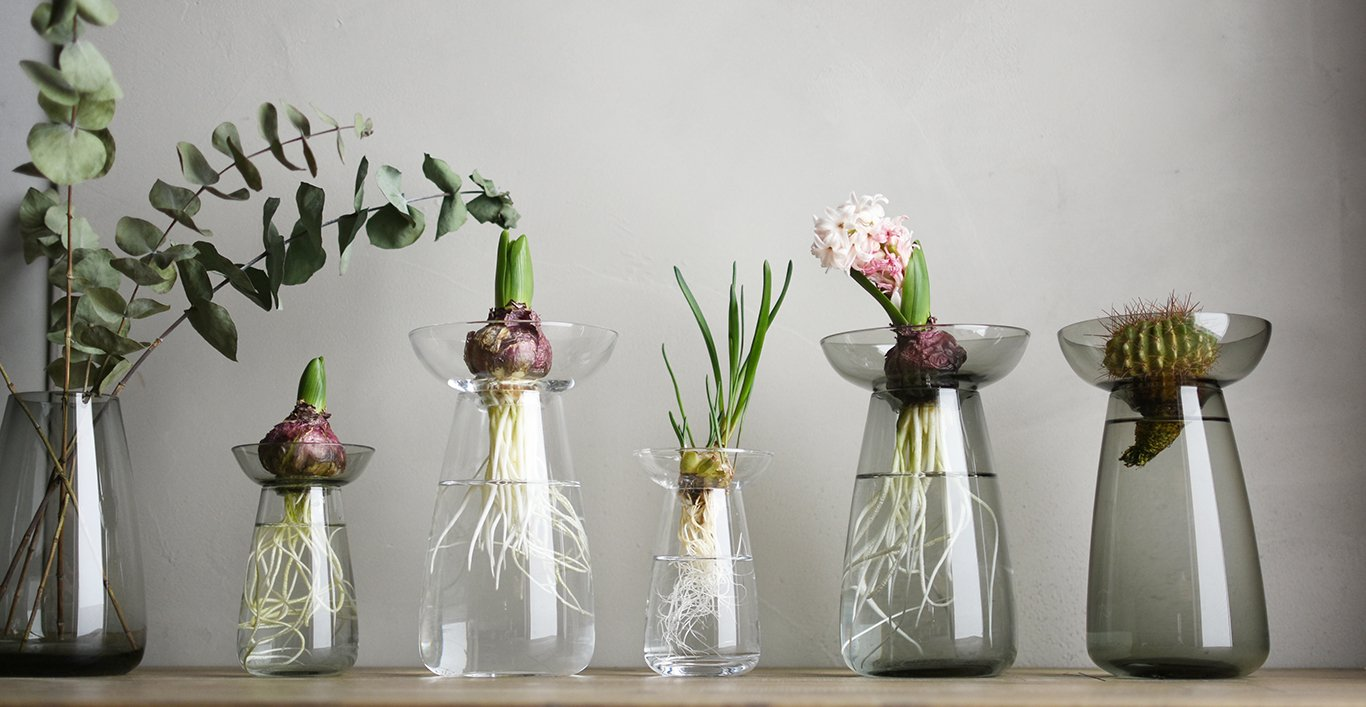 AQUA CULTURE vase collection in clear and gray with assortment of plants and vegetables inside