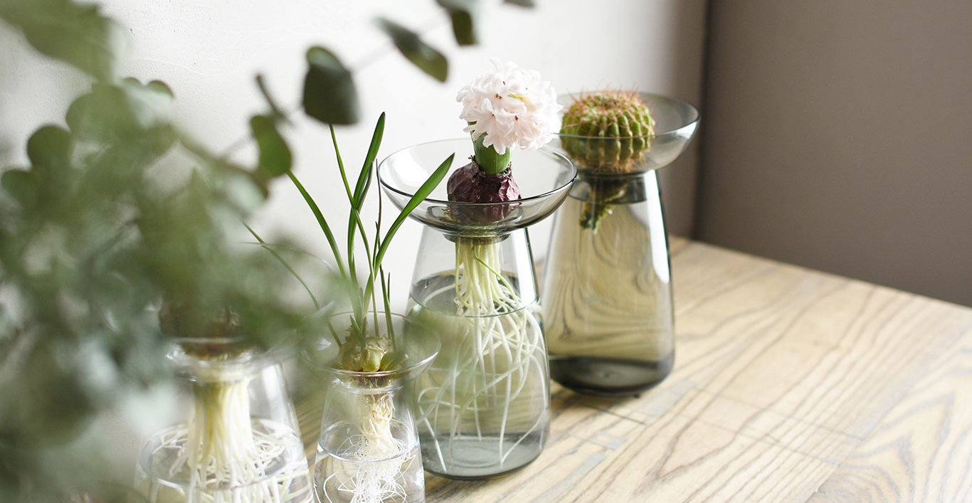AQUA CULTURE vases with propagated succulents