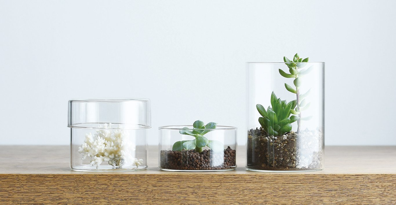 SCHALE collection with succulents inside